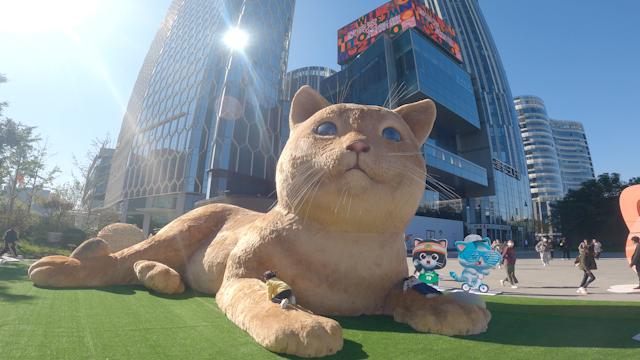猫奴三里屯聚众吸猫,不薅羊毛改薅猫毛