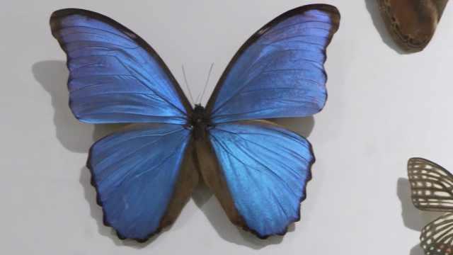 21名师生制作昆虫标本组建科普馆:种类207,样本总数2356个