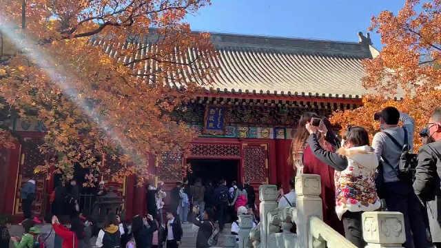 香山红叶渐入最佳观赏期,本周末迎来首个客流高峰