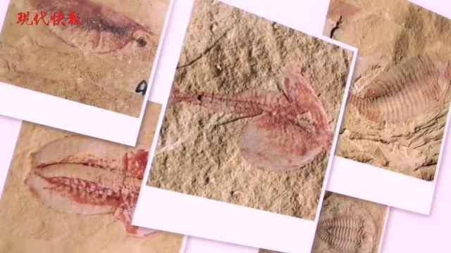 乖乖,5亿多年前的虾登上《Nature》了!