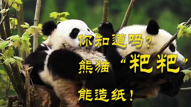 """你知道吗?熊猫的""""粑粑""""能造纸!这样的纸巾你敢用吗?"""