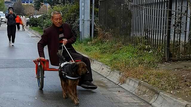 """流浪狗被救后套车拉主人逛街,最远跑了5公里,获名""""能干"""""""