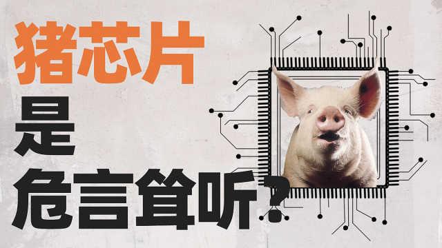 世界第一猪肉大国,养猪仍要靠进口?