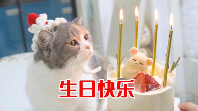 4只猫咪一起过生日,主人为它们做蛋糕,太开心了!