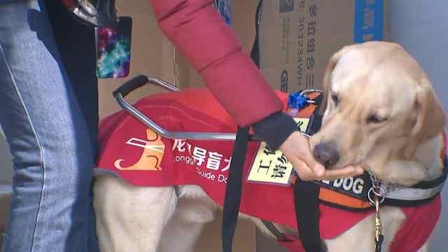 小麦,你好!苏州第一只导盲犬来了