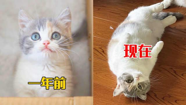 一年时间,猫的变化能有多大?完全面目全非!