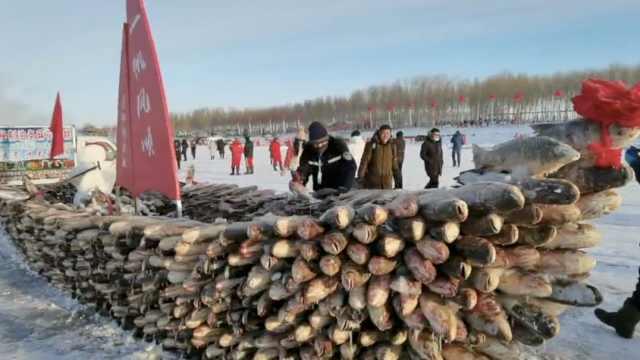 黑龙江冬捕一网捞出25万斤鱼,2888条胖头鱼被冻成一条船
