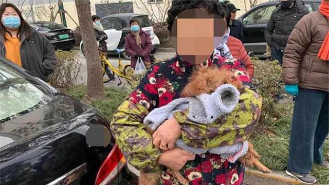 没拴绳小狗横穿马路被撞死,交警:狗主人承担全部责任