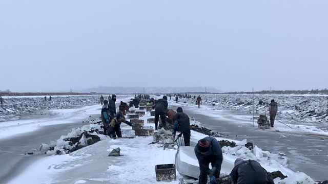 冰厚30多厘米,挖蛏人三九寒天抡镐破冰
