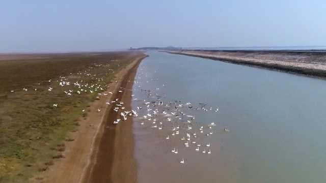鄱阳湖渔民上岸:枯水期护鸟,丰水期打工