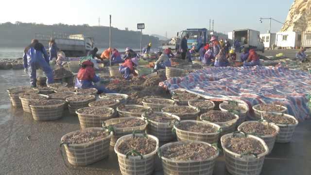 跟温岭渔民夜出日归打渔做1天渔民,小海鲜摆满码头成抢手货