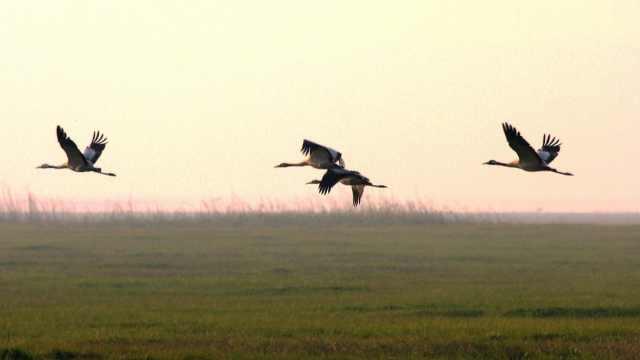 鄱阳湖上的候鸟乐园:为受伤候鸟提供庇护所