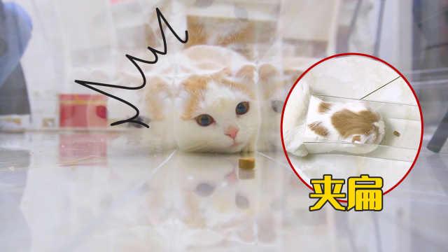 自制猫咪透明通道,猫头被卡在里面,气到暴力破坏!