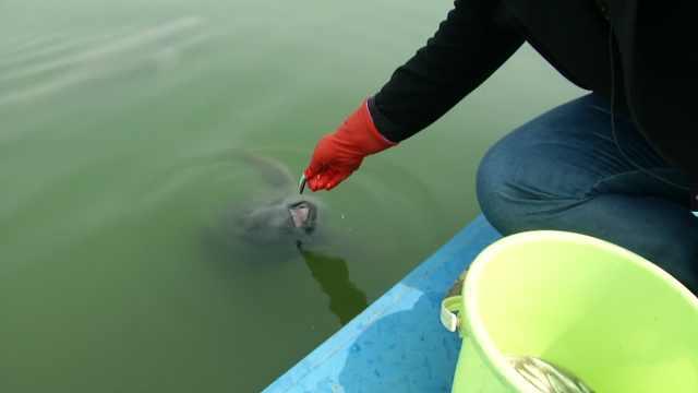 长江江豚,升为国家一级保护野生动物
