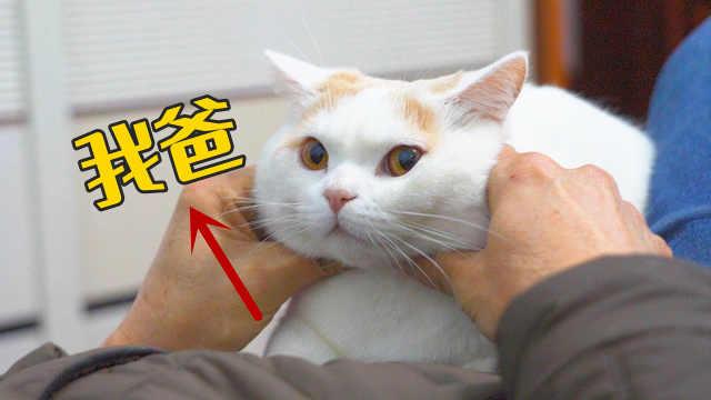 自从带猫回家,爸妈把猫当亲生的来养,我失宠了!