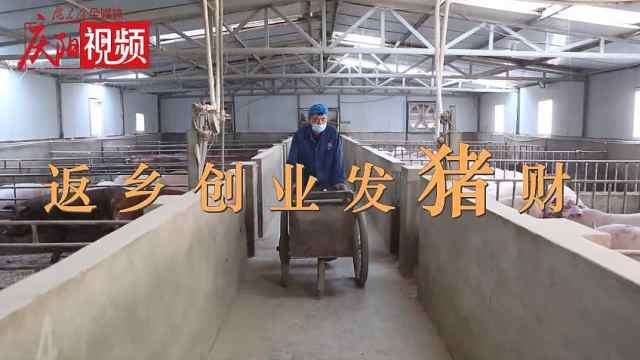 刘龙:返乡创业,养猪发财