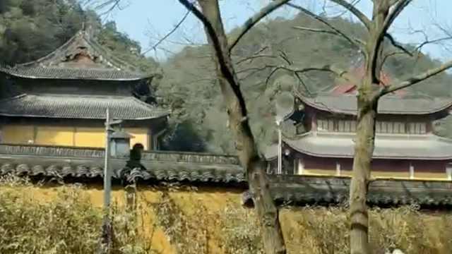 打卡杭州最美公交线:过灵隐寺等4寺庙,坐网红秋千眺望西湖