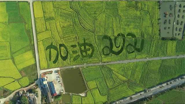 """航拍湖南小镇万亩油菜花绽放!""""加油2021""""巨型图案点缀其中"""
