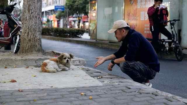 八年寻回上千只宠物,国内宠物侦探第一人