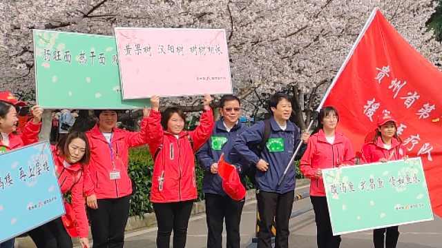 """武汉大学樱花盛开,这是一场""""春天的约定""""!"""
