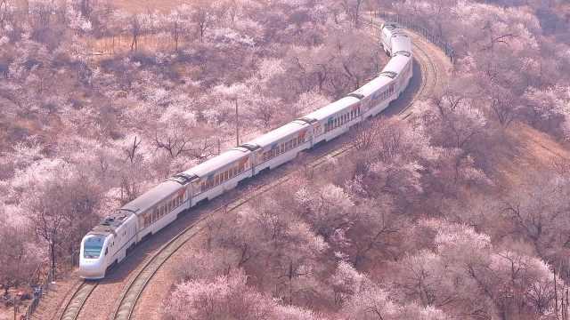 长城脚下山花烂漫,列车穿越花海徐徐驶来