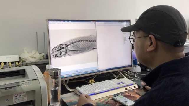 鱼类新种记录!中科院博士在无量山收工时发现川河云南鳅