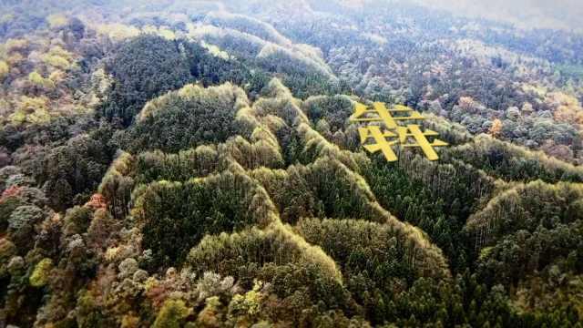 """邛崃天台山森林长出""""犇""""字,其实是无心插柳的结果"""