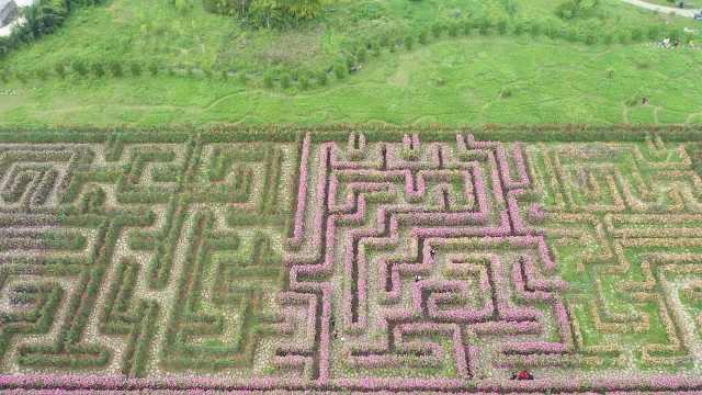 敢挑战吗?贵州160米长鲜花迷宫有10余种花,航拍像3D二维码