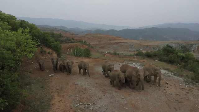 17头亚洲象进入云南元江觅食,村民街道撒玉米招待
