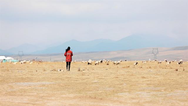4000米高原一个人的快递站,她 5年跑了25万公里