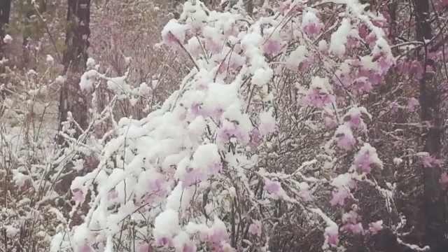 恍如穿越!漠河夏天突降大雪,雪深4厘米气温跌破零度