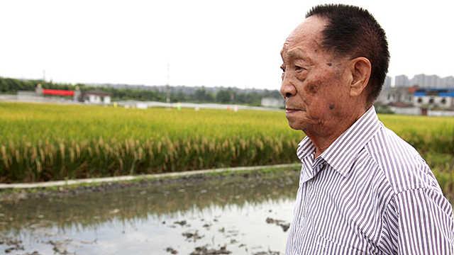 袁隆平先生:矢志不移 心怀天下的仁者