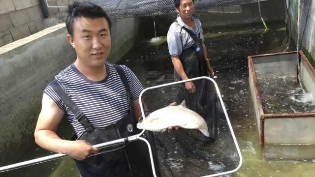 海归博士弃高管工作回乡养珍稀鱼:从不后悔,我要一直做下去