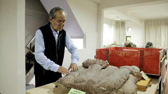 88岁老人收藏3万件化石,包含7颗连体恐龙蛋化石