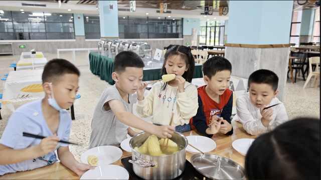 小学建20亩农耕体验区种30余种作物:希望孩子体验粒粒皆辛苦