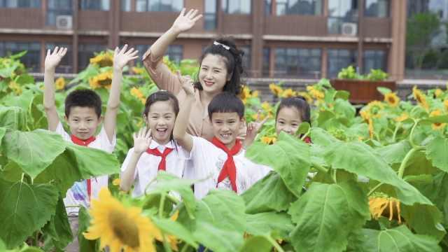 重庆一小学教学楼顶种了14000株向日葵!学生放假有瓜子吃了