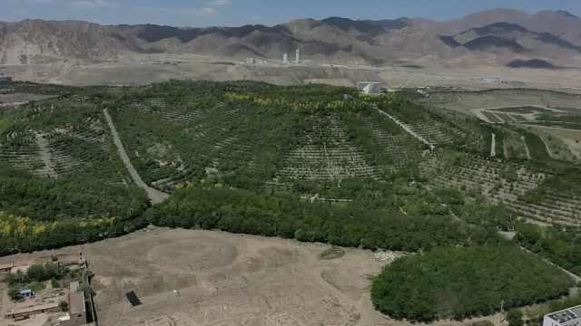 8旬老人带领150人植树25年戈壁变绿洲,这片森林以他名字命名