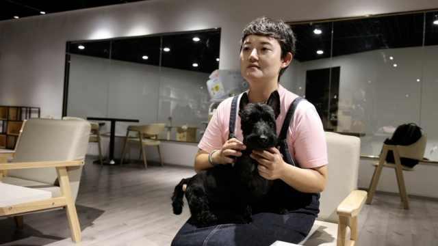 女子8年帮3千只宠物狗减肥:畸形审美正影响狗狗寿命