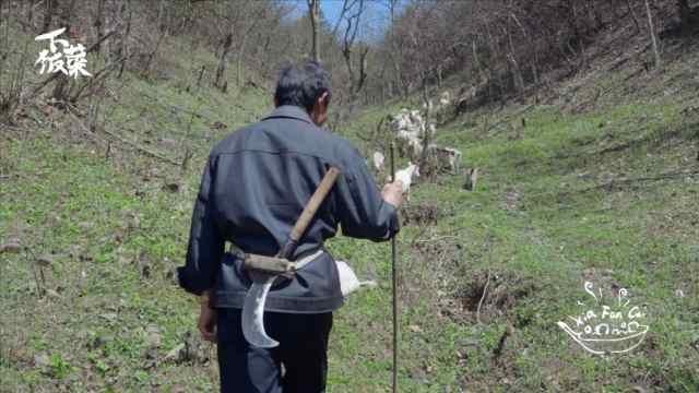 要操心的事太多,最开心的时候就是放羊的时候
