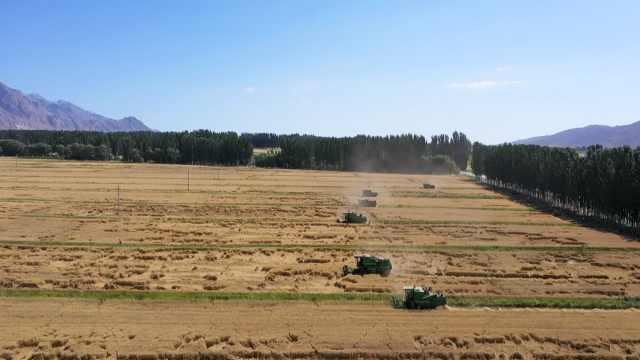 麦浪滚滚!航拍新疆拜城数十万亩冬小麦收割