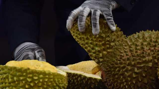 200多个品种!来看马来西亚的猫山王榴莲