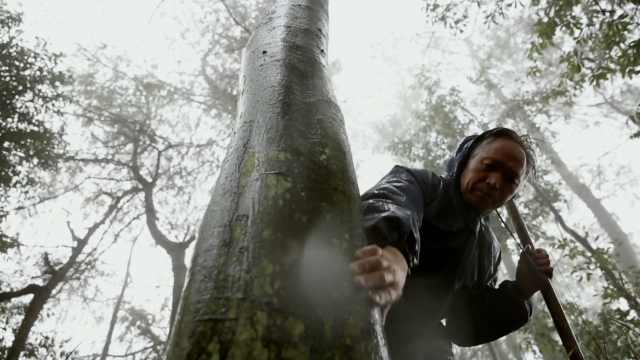 风雪巡山员护林36年:爱树如爱娃,一天不看心里难受