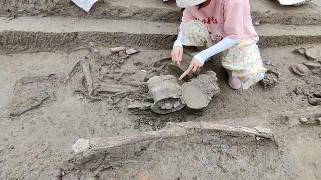 罕见!成都发现先秦区域中心聚落遗址,出土大量青铜器玉石器