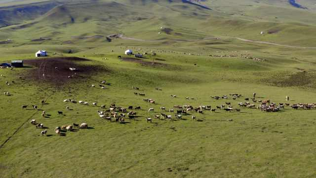 绝美!航拍新疆昭苏800万亩大草原,数十万头牛羊马如繁星点点