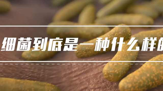 郝柏林院士:走近与人类共生共存的细菌世界