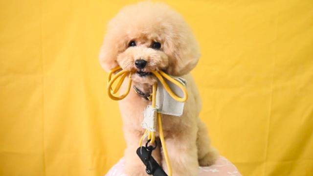 为什么出门遛狗时一定要牵狗绳?