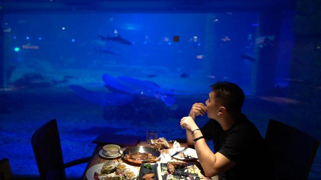 一边看鲨鱼一边吃西餐是什么感觉?
