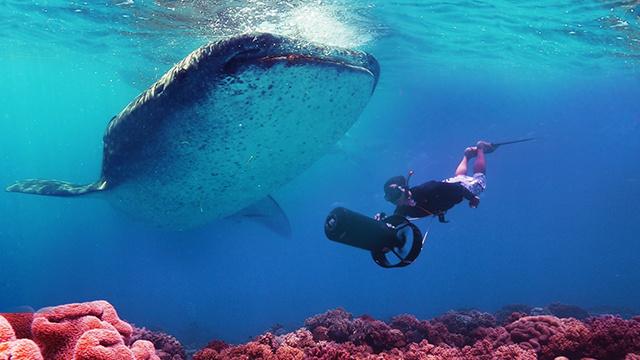 两女一男深潜大海100米与鲨鱼共舞