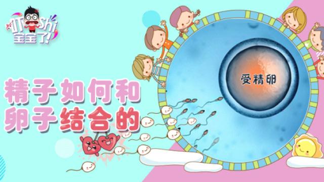 生命的律动:当精子遇到卵子