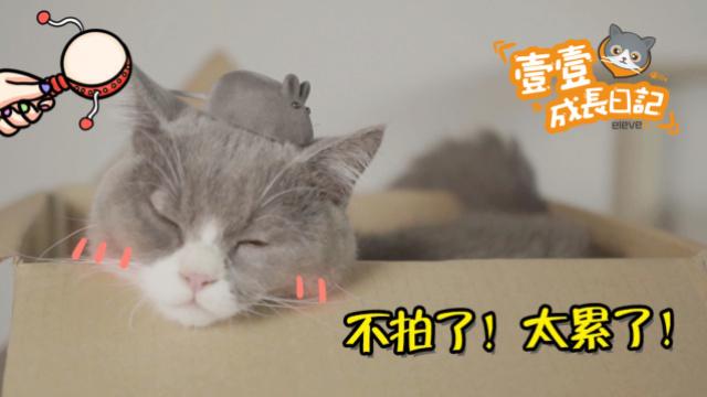 猫咪玩具喜好:朕喜欢就好